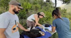 Pla mitjà de personal expert de TRENCA i GREFA prenent dades dels polls