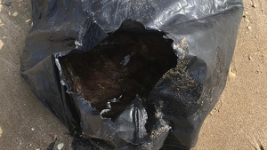 Set gossos morts han estat trobats en una platja de les Terres de l'Ebre