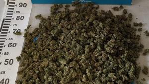 1,2 kg de marihuana comissada per la Policia Municipal de Girona