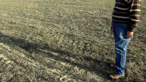 El coordinador d'UP a la Segarra, Ramon Augé, en una finca de cereal que pateix els efectes de la sequera