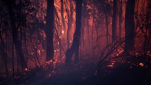 Els incendis d'aquest any a Austràlia podrien convertir-se en els més devastadors de les últimes decades