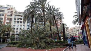 Imagen de la palmera que ha caído