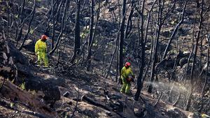Imatge de dos treballadors en les tasques de restauració de la zona de l'incendi de la Ribera d'Ebre