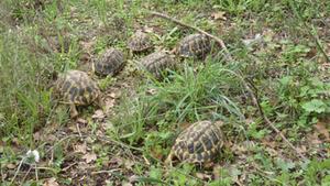 Imatge de les tortugues alliberades