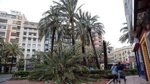 La dona ha mort per l'impacte d'una palmera