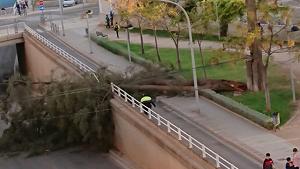 L'arbre caigut en VIla-real