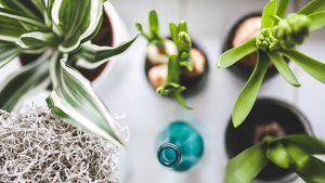 Las plantas en espacios interiores ayudan a decorar el espacio