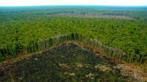 Los incendios de este agosto no fueron normales en la Amazonía debido al aumento de la deforestación