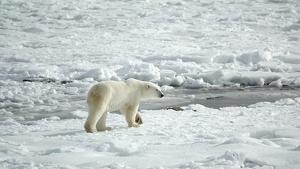 Los modelos climáticos predicen que los veranos árticos pronto estarán libres de hielo