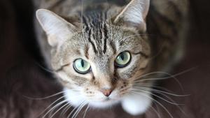 Un gat va salvar la vida d'un bebè a l'últim moment a Colòmbia