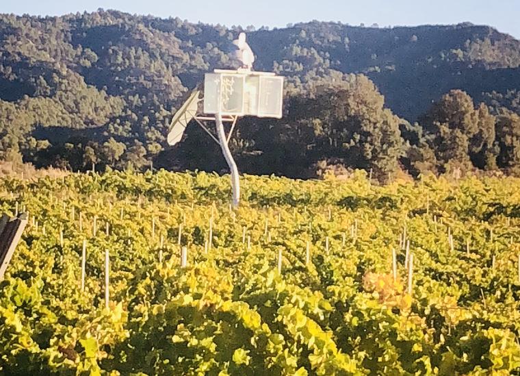 Les vinyes del celler Costers del Sió a la DO Costers del Segre