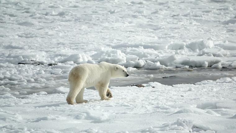 El último gran santuario de hielo marino ártico se desvanece rápidamente - El Tiempo en España