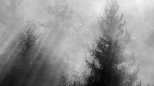 Imatge de les boires matinals de dimarts al Pallars Sobirà
