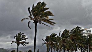 Viento palmera
