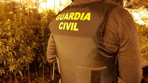 Imatge de la Guàrdia Civil a la plantació de marihuana descoberta.