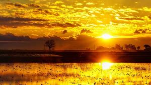 Sortida de sol un matí al Delta de l'Ebre