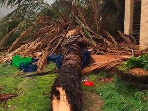 La palmera centenària de Mas Martinet que s'ha endut el temporal