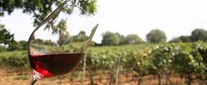 L'objectiu del concurs és promocionar el vi de qualitat