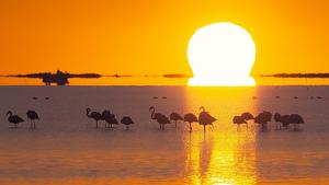 Imatge d'una sortida de sol radiant al Delta de l'Ebre amb els flamencs en primer pla