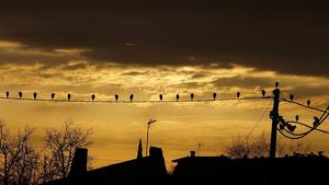 Imatge d'un dia de sol i núvols a Verges, al Baix Empordà