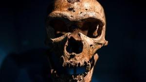 Imagen de un cráneo de humano