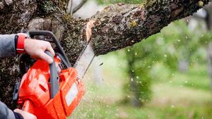 Una persona cortando un árbol con una motosierra