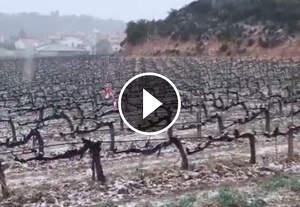 La neu ha arribat a la vinya de Cérvoles celler