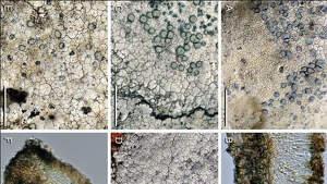 Imágenes de líquenes en las Galápagos