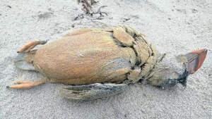 Imagen de una ave muerta