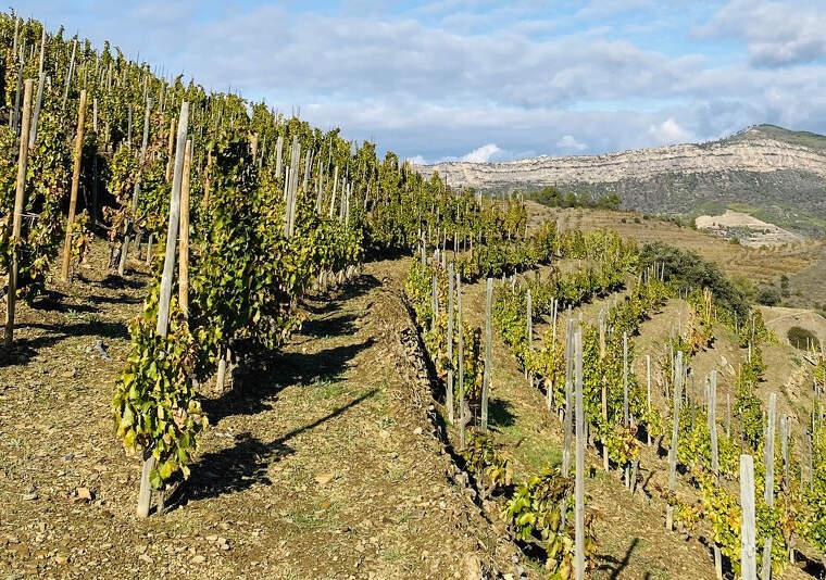 La vinya de l'Ermita d'Álvaro Palacios