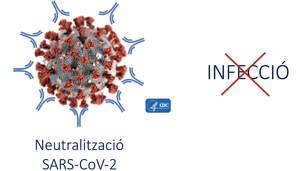 La UAB treballa en una vacuna contra el coronavirus