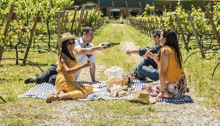 Pícnic a la vinya és una de les noves propostes enoturístiques de Torres