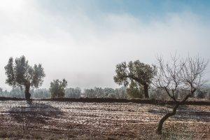 Gebrades al gener al Camp de Tarragona