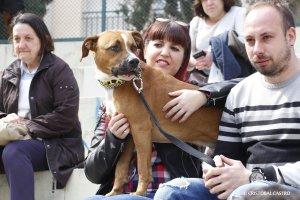 Improcan celebra els 3 anys protegint els gossos de Terrassa