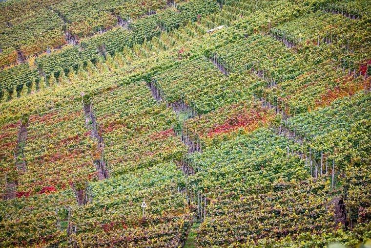 Espectaculars paisatges de vinyes des de l'aire