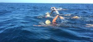 El grup de quatre nedadors durant la travessa.