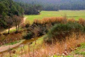 Imatge del Parc Natural de Collserola, al seu pas per Cerdanyola del Vallès