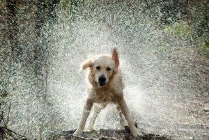 Un cop de calor podria acabar amb la nostra mascota en 15 minuts