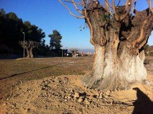 La Junta de Veïns aprovarà l'adjudicació dels serveis pel manteniment de terrenys de titularitat pública