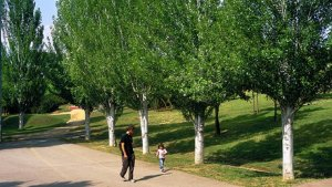 El parc del Turonet