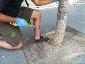 El tractament s'aplica a través d'un forat als arbres