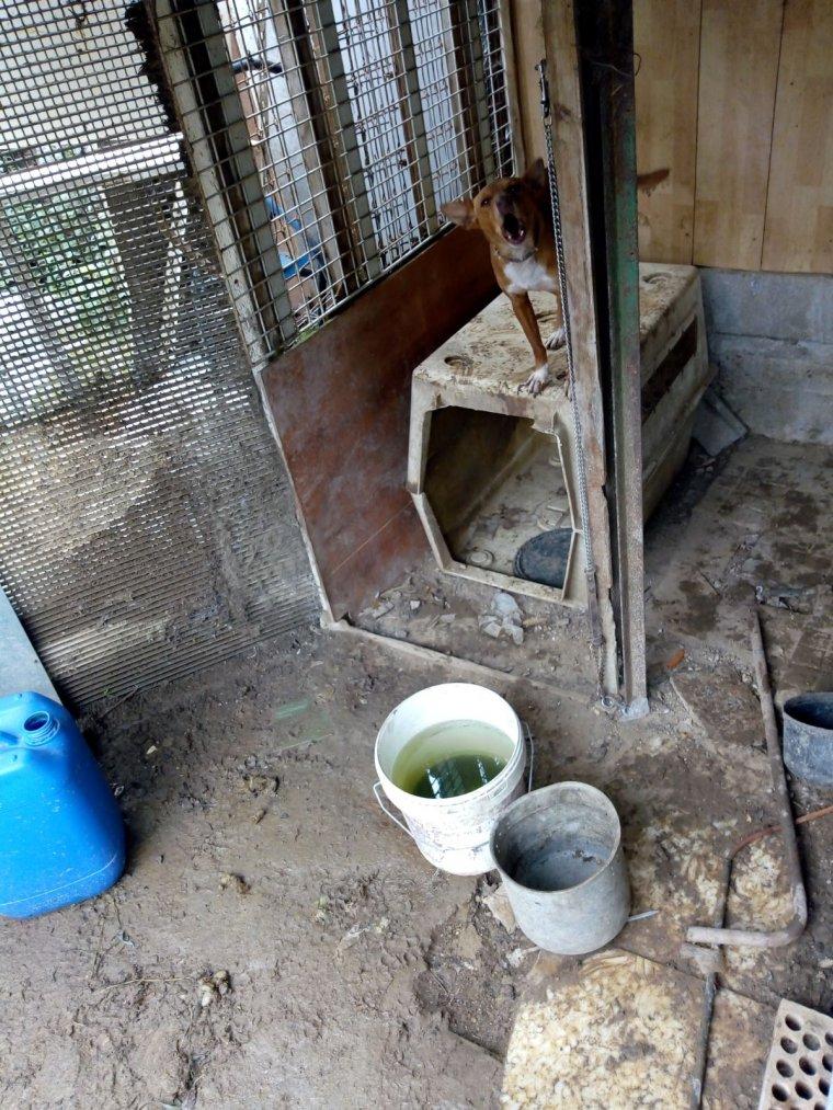 ADAC es va trobar gossos en gà bies petites i gats i animals de granja