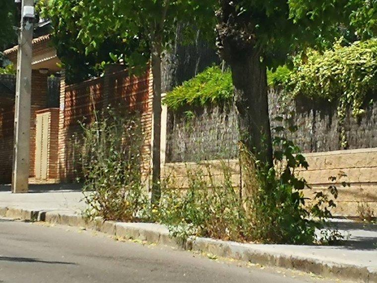 Imatge dels arbres a Cerdanyola publicada al grup de Facebook No eres de Cerdanyola si...