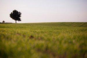 Un paisatge preciós de Collserola