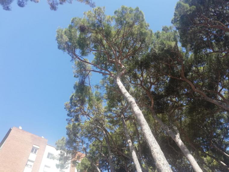 niu, arbre
