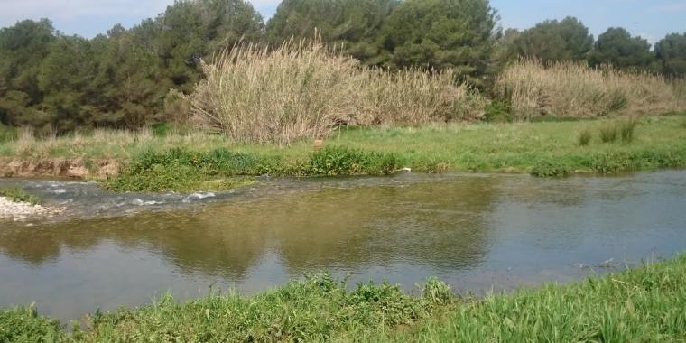El río Francolí, en su paso por la zona próxima a la Pobla de Mafumet i el Morell.