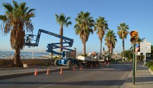 Les palmeres afectades per les obres, al vial Bryant.