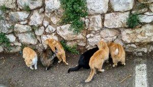 Colònia de gats abandonats