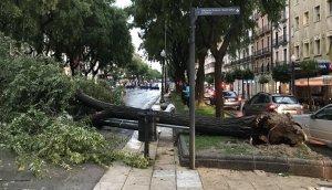 Un arbre caigut al mig de la Rambla Nova de Tarragona a causa del fort vent.