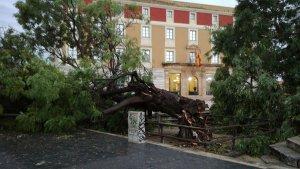 Un arbre caigut també al passeig de Sant Antoni, davant l'edifici de la Diputació.